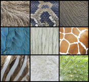 Animal  Skin, Fur And Feathers Collage. Animal Pattern Texture Of Skin, Fur And Feathers Royalty Free Stock Photos