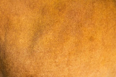Animal skin. Genuine texture bull brown background Royalty Free Stock Images