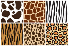 Animal skin. Seamless patterns for design. Cow, giraffe, zebra, tiger, cheetah, leopard Stock Photography