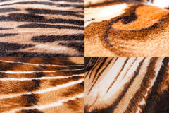 Animal skin texture. S, Tiger print, background patterns Stock Photography