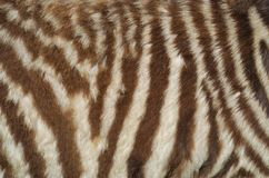 Animal skin texture stock photos