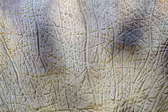 Animal skin texture Royalty Free Stock Photography