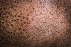 Animal Skin texture Hippo Royalty Free Stock Image