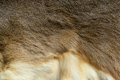 Animal skin textured and fur. Close up of animal skin textured and fur Stock Photography