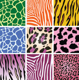 Animal skin textures Stock Images