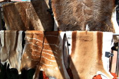 Animal skin trade. Animal fur for sale in an south african shop royalty free stock image