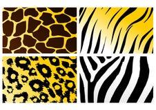 Animal skins Royalty Free Stock Image