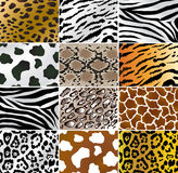 Animal skins. Illustation of different animals and snakes skins Royalty Free Stock Photography