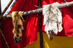 Animal skins displayed by native american people royalty free stock photography