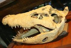 Animal skull. On the exposition stock image
