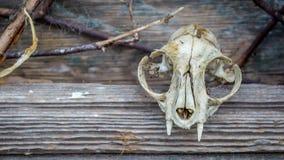 Animal Skull and Barn Royalty Free Stock Image