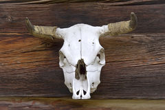 Animal skull. Of a bull as an old symbol of power Stock Photo