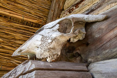 Animal skull Royalty Free Stock Images