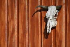 Animal skull. The cow´s skull on the wooden gate Stock Photos