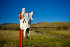 Animal Skull on Fence Post Royalty Free Stock Images