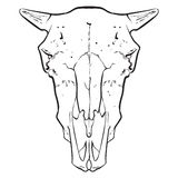 Animal Skull. A hand drawn animal skull Royalty Free Stock Images