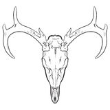 Animal Skull. A hand drawn animal skull Royalty Free Stock Image