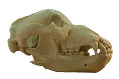 Animal skull bone isolated on whit backgreound. Animal skull head bone fron the side and isolated stock image