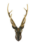 Animal skull with horn Royalty Free Stock Images