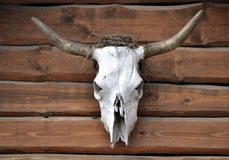 Animal skull. With horns hanging on wood Stock Photo