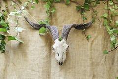 Animal Skull india Stock Photos