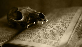 Animal skull upon an old bible Royalty Free Stock Photos
