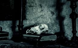 Animal skull with old books. Detail of antique decoration stock photography
