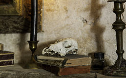 Animal skull with old books. Detail of antique decoration royalty free stock photos