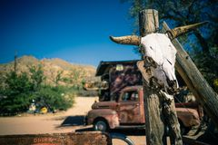 An animal skull on a pole in Death Valley Arizona. The skull of an animal, likely cattle, is tied to a pole at a rest stop in Death Valley. This picture was stock image