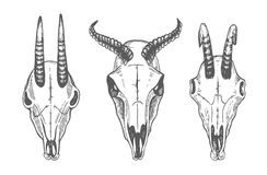 Animal skull. Sheep, goats. Line art. Collection Of Hand Drawn Skulls. Ink Set Royalty Free Stock Photos