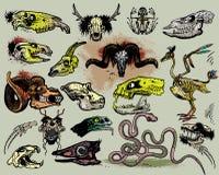 Animal skulls Stock Image