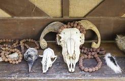 Animal Skulls Royalty Free Stock Images