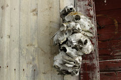 Animal skulls Stock Photography