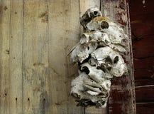 Animal skulls Stock Photography