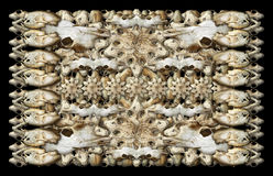 Animal Skulls Background. Digital composite of my photographs of the skulls of various mammals Royalty Free Stock Image