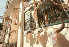 Animal skulls with horns for sale on facade of small store of decor and home design stock photo