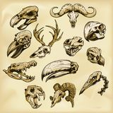 Animal skulls illustration Royalty Free Stock Image