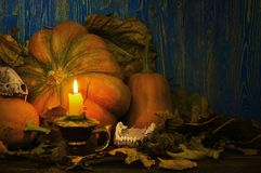 Animal skulls and pumpkins lit a candle at dusk Royalty Free Stock Photo