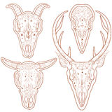 Animal skulls Royalty Free Stock Photos