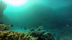 Animal, Snorkeling, The world under water. stock video