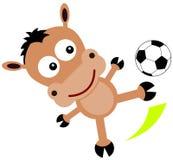 Animal soccer kick Stock Photos