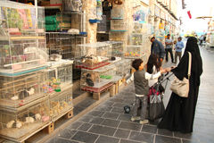 Animal souq in Doha, Qatar Royalty Free Stock Images