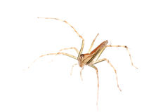 Animal spider Royalty Free Stock Image