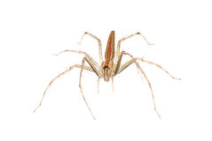 Animal spider Stock Photography