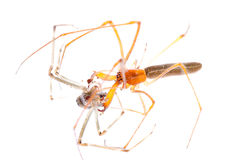 Animal spider fight Royalty Free Stock Images