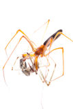 Animal spider fight Royalty Free Stock Photos