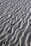 Animal tracks in desert sand - Namibia. Animal spore (tracks) in the sands of the Namib Desert in Namibia Stock Photography