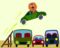 Animal stunt driver. A lion trying to jump three old vehicles while driving a car Royalty Free Stock Image