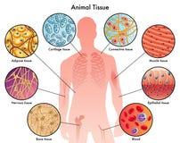 Free Animal Tissues Stock Image - 53232761