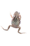 Animal toad frog Stock Photos